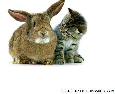 rencontre et chat algerie Chat - définitions français : retrouvez la définition de chat, ainsi que les homonymes - dictionnaire, définitions, section_expression, conjugaison, synonymes, homonymes, difficultés, citations.