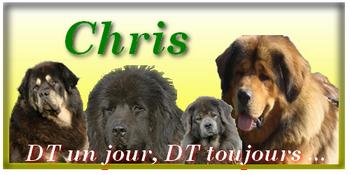 Eleveur de Dogues du Tibet