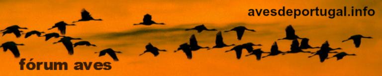 Fórum Aves