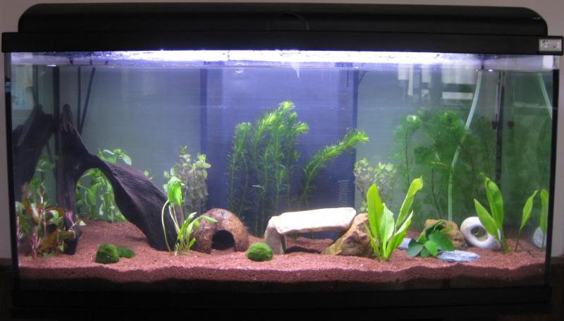 aquarium fra chement plant qu 39 en pensez vous. Black Bedroom Furniture Sets. Home Design Ideas