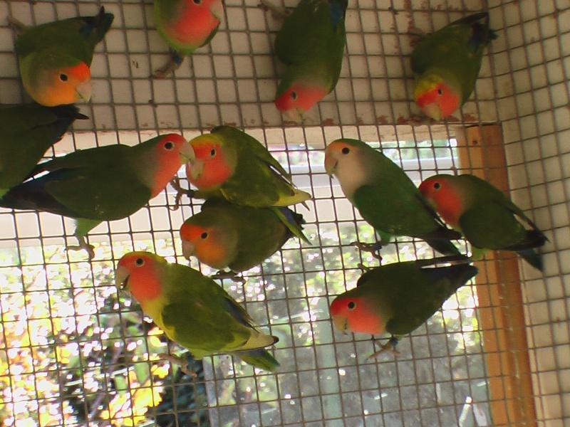 oiseau13.jpg