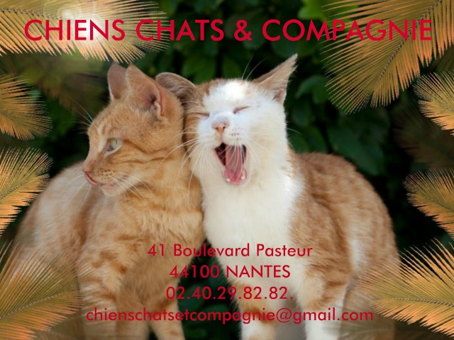 CHIENS CHATS & COMPAGNIE - Association de Protection Animale sur Nantes et sa R�gion