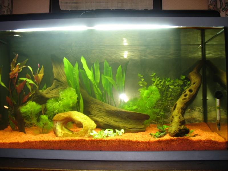 aquari14.jpg