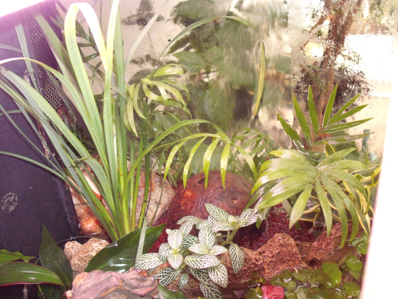 Plantes qui aiment avoir les pieds dans l 39 eau - Plantes qui poussent dans l eau ...