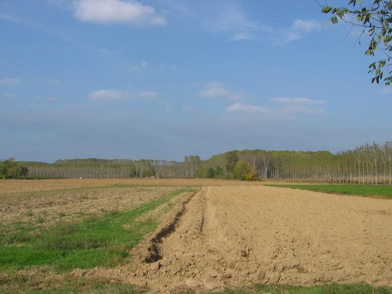 Scorci di autunno nella campagna torinese for Piani di campagna in collina