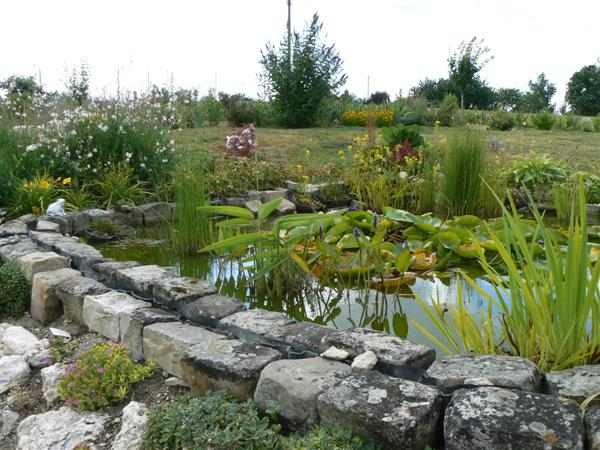 Le forum de passion bassin bassin de jardin baignade naturelle technique plantes aquatiques - Bassin japonais carpe koi asnieres sur seine ...