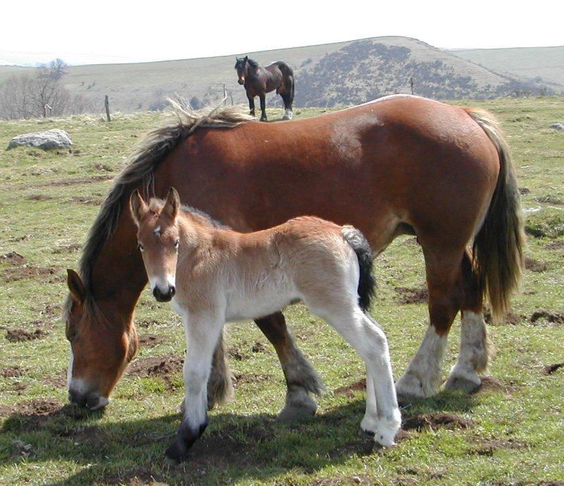 Le cheval  plus qu'une passion !!!