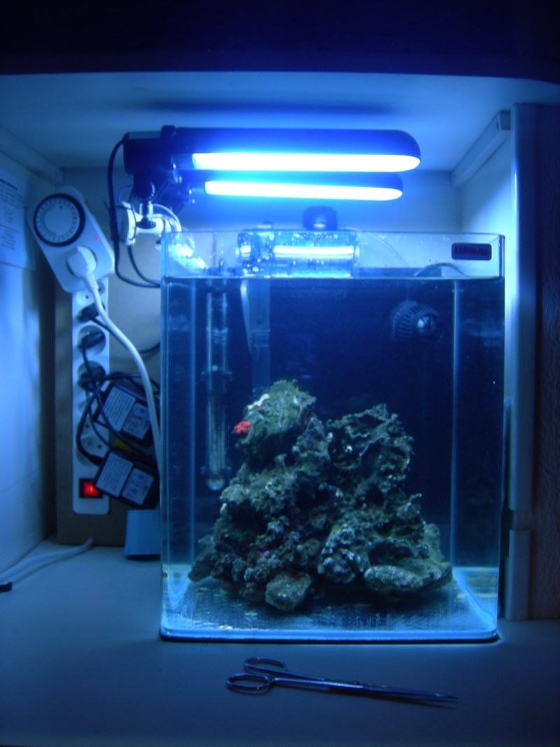 Nano aquarium eau de mer 30l for Aquarium de mer