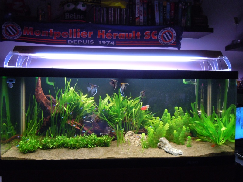 500 litres scalaires evolution pontes for Alimentation poisson rouge adulte