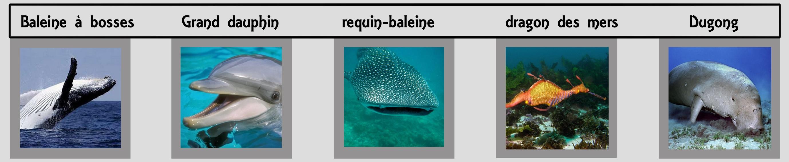 bannière des animaux des fonds marins ancérien