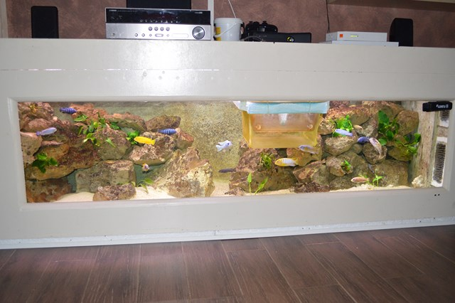 Mes cichlides africain du lac malawi for Decoration aquarium maison