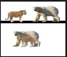 polar bear newborn size