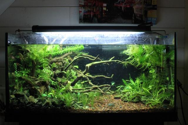 mon aquarium plant 96l. Black Bedroom Furniture Sets. Home Design Ideas