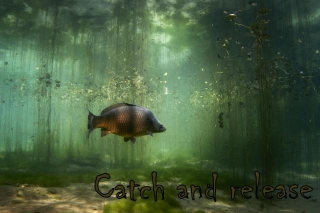Experience Carp: Le coin des passionnés