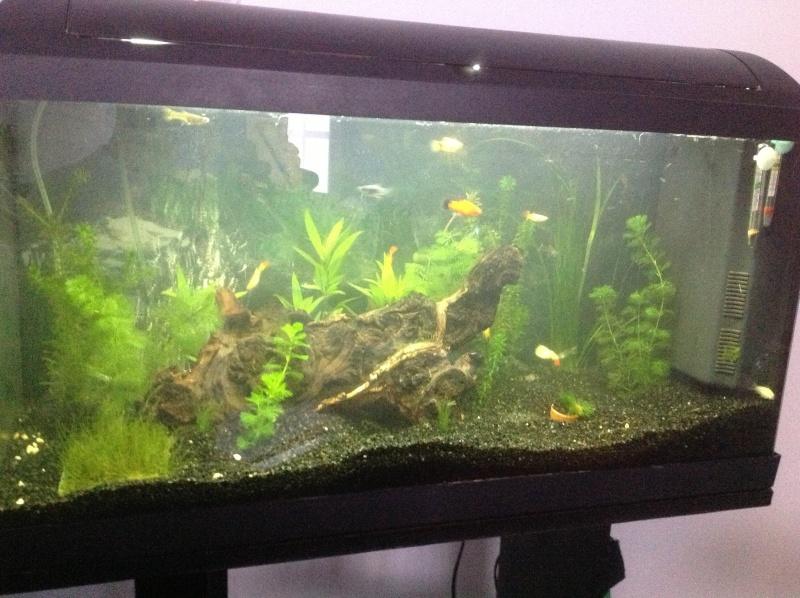 aquarium 100 l de guppy14. Black Bedroom Furniture Sets. Home Design Ideas