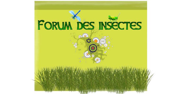 Forum des insectes : Le coin de l'entomologie