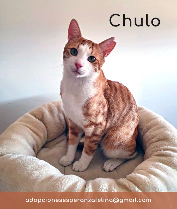 chulo_11.jpg