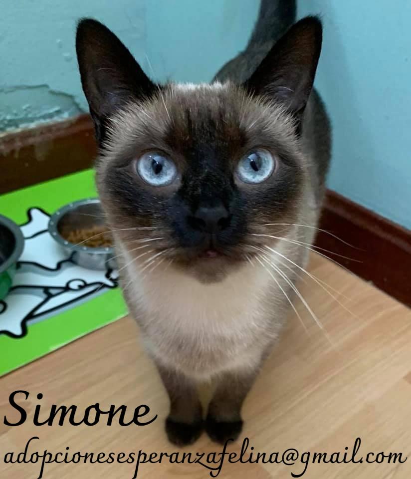 simone12.jpg