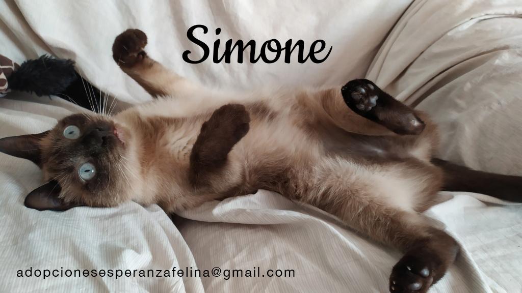 simone13.jpg